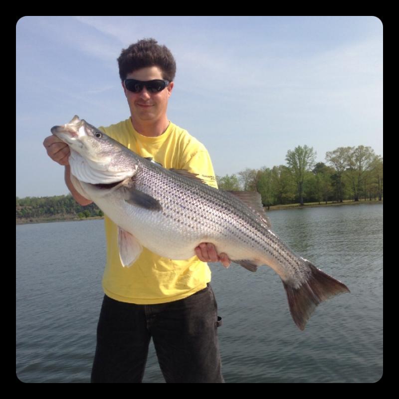 Smith lake smith lake striper fishing for Smith mountain lake striper fishing
